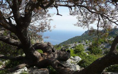 Terre Civiche: Ambiente, Comunità, Coesione Sociale e Sviluppo Territoriale